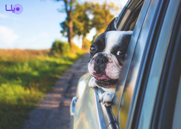 قانون نگهداری سگ