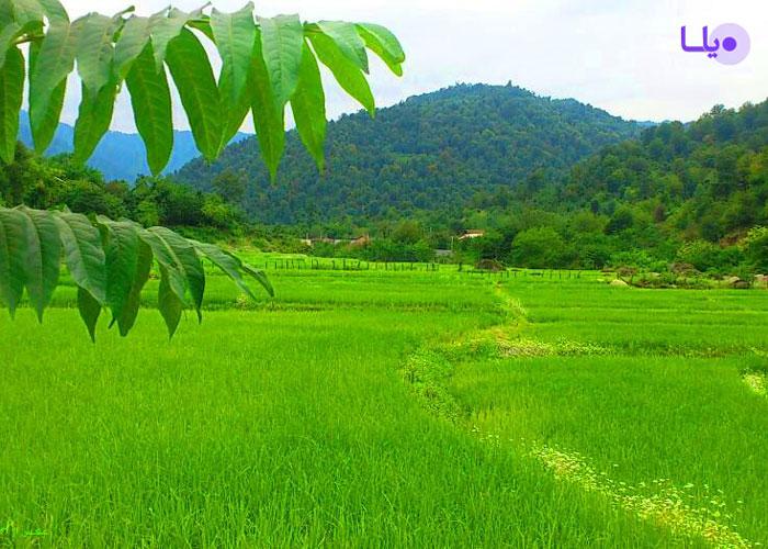 اجرت المثل زمین کشاورزی