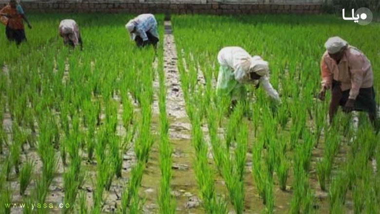 شرایط و مراحل طرح دعوای اجرت المثل ایام تصرف زمین مزروعی
