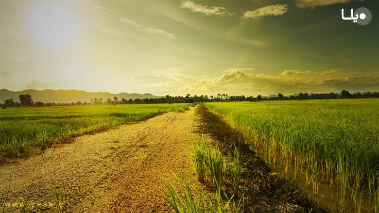 رویه قصایی فعلی محاکم در مطالبه اجرت المثل ایام تصرف زمین زراعی و کشاورزی